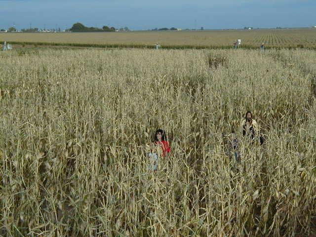 children of corn. Children Of The Corn: corn 050